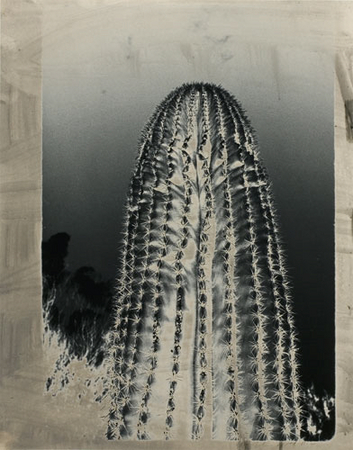 Cactus, 1988–1990.