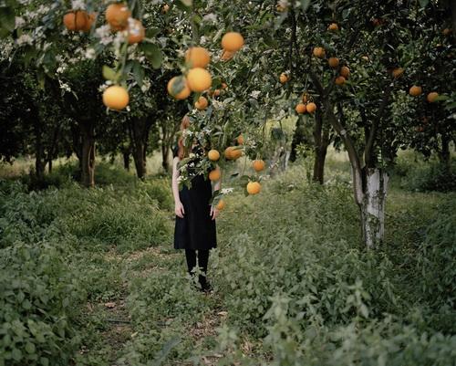 Anni Leppala. Orange Tree, 2008, c-print, aluminium, 62,5 x 80 cm