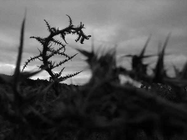 © Робо Кочан