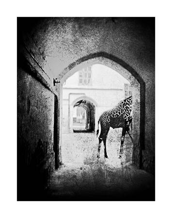 Oleksii Pishtar<br />  «Giraffe», from series «Mystification of the city»<br />  Oil print, 29х38, author's property.