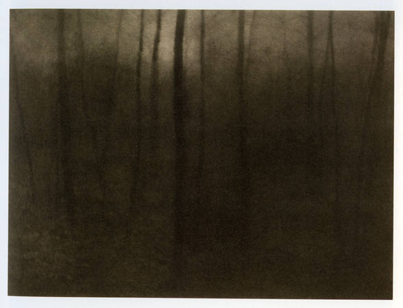 "Edward Steichen. ""Woods Twilight"".1899. Platinum   print"