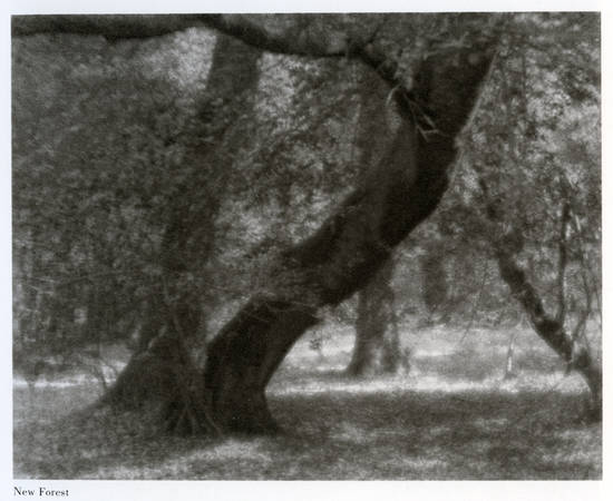 "Frederick Henry Evans. ""New Forest"". Circa 1900. Platinum print"