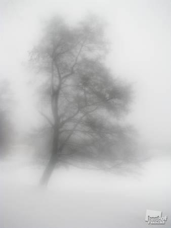 Морозное утро. Дыхание<br> Ольга Анисимова, 20 лет. г. Москва