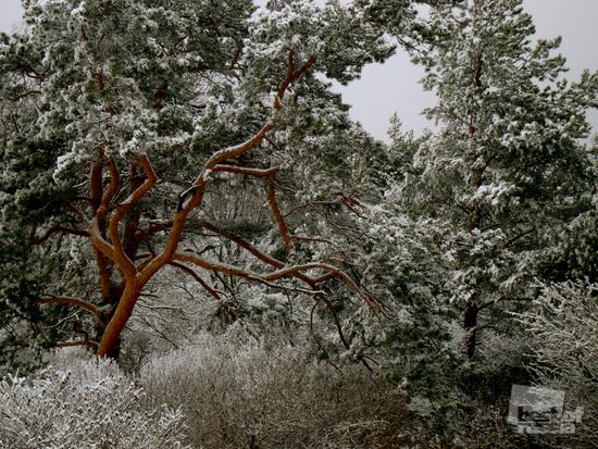 Зима, зима…Финский залив, -23°C<br> Ирина Белопольская, 27 лет. г. Санкт-Петербург
