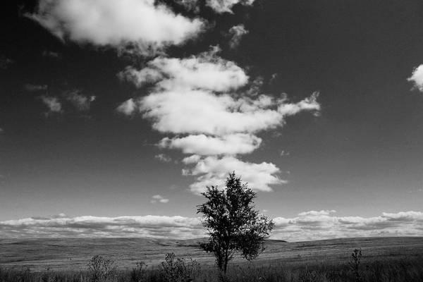 ©Фарит Губаев. «Астраханская степь. 2008»