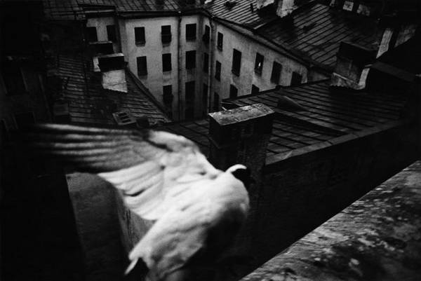 ©Борис Смелов. «Голубь. 1975»