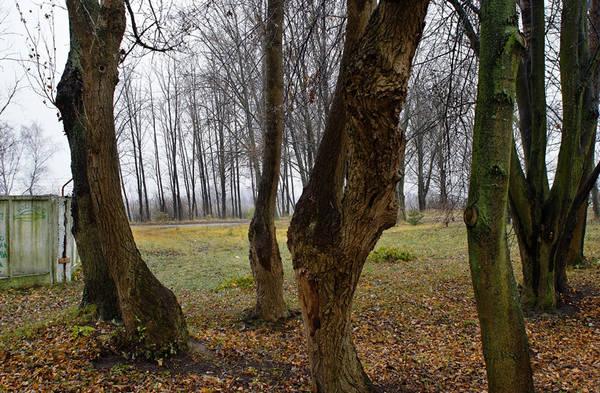 ©Группа авторов. «Андрей Харитонов. Лиепая 10.11.09»