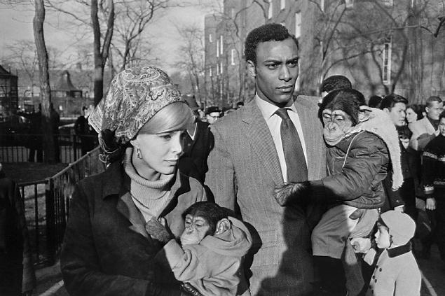 Garry Winogrand.  Central Park Zoo, New York City.  1964<br />  © Estate of Garry Winogrand