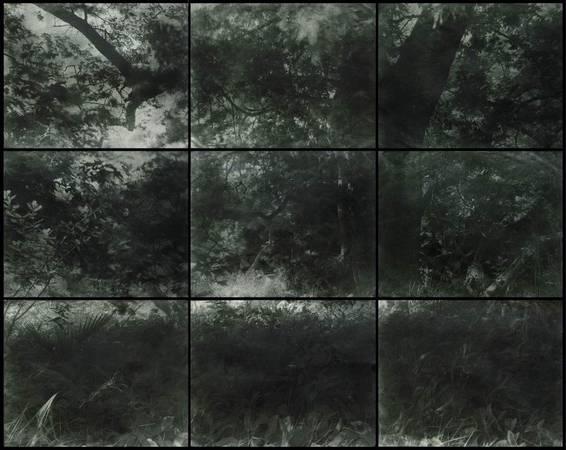 © Дмитрий Орлов. 9 гумми-бихроматных отпечатков. 150х210см