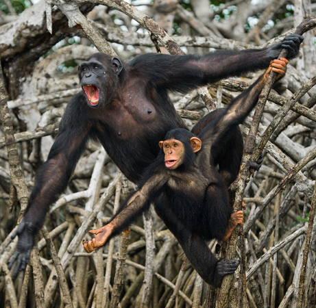 Андрей Гудков, республика Конго. Национальный парк Конкуати
