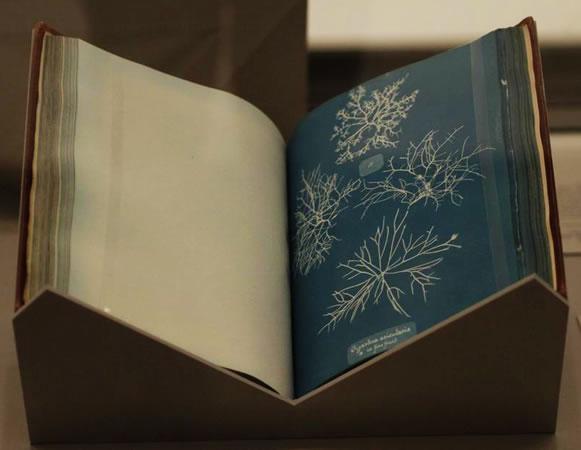 Первая циано-типийная книжка Мари Эткинс