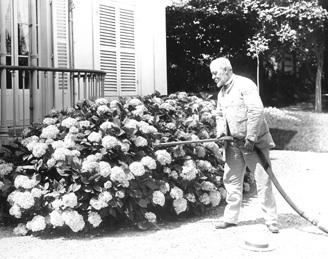 Martial Caillebotte.Camille Minoret arrosant des hortensias Tirage photographique, 17 x 22 cm, collection privйe © D.R