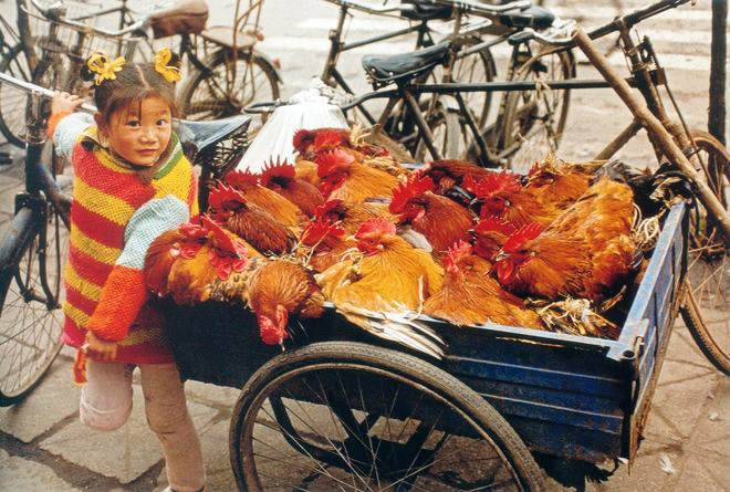 На рынок - Девочка с курицами. Чэнду, Сычуань, Китай. Бумага, жикле. 50 х 75