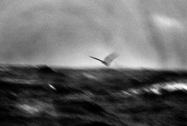 © Крис Малужински
