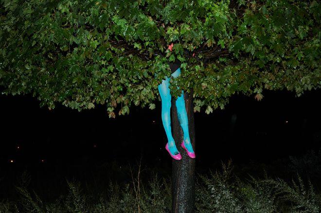 Сесилия Малик. 356 деревьев