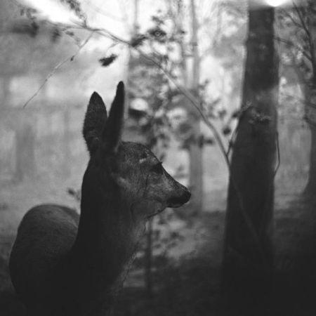 © Андрей Ленкевич