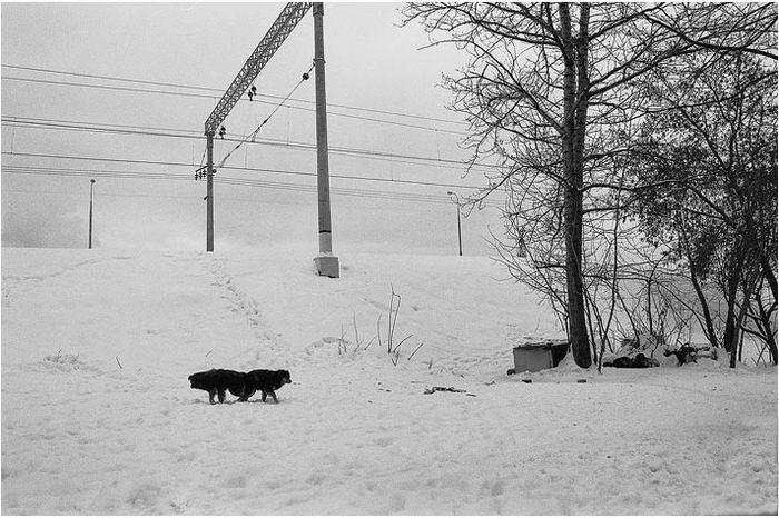 © Вадим Савраев