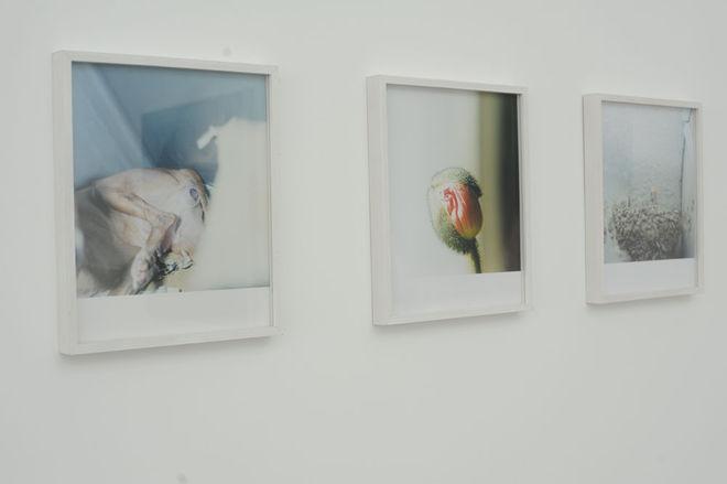 """Из выставки """"Жизненные циклы"""" © Rinko Kawauchi"""