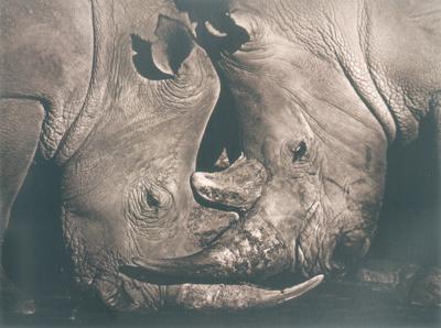 Антон Лялин. Портрет Африки