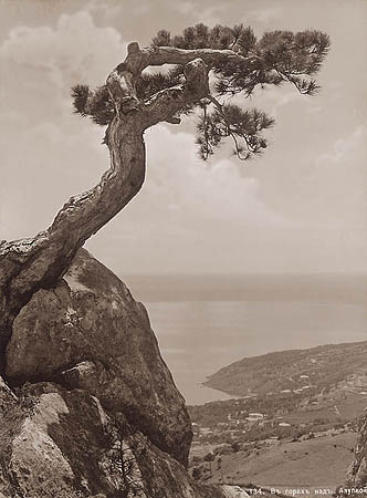 &copy;Василий Сокорнов. «В горах. Вид Алупки. 1900-е<br> Бромсеребряный отпечаток с широкого стеклянного негатива»