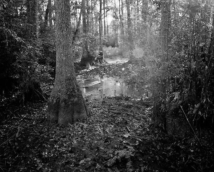 Кэбин Понд (Cabin Pond) в штате Виргиния. Здесь чернокожий раб Нат Тернер получил видение о том, что должен начать восстание рабов.  © Andrew Lichtenstein.
