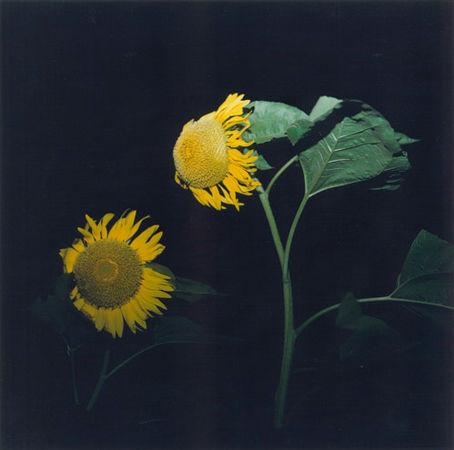 © Rinko Kawauchi. 2001