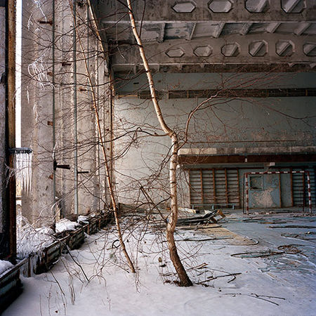 Rena Effendi, from the series Still Life in the Zone (Birch Tree Growing on the Second Floor of a GYM in the Abandoned City of Prypiats. As a Result of the Nuclear Accident and the Subsequent Radioactive Fallout the Entire Population of Prypiats Had Been Evacuated and Never Returned Home, Chernobyl, Ukraine, December 2010)