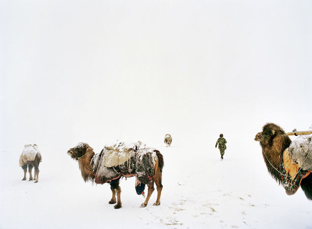 Daryo Boi, the Khan's shepherd, takes the camels out from the camp. High Pamir, Afghanistan. © Matthieu Paley