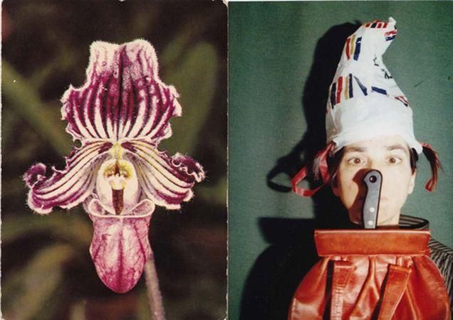 Orchidee © Christiane Seiffert
