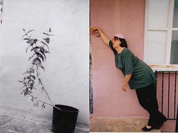 Plante fatigante © Christiane Seiffert