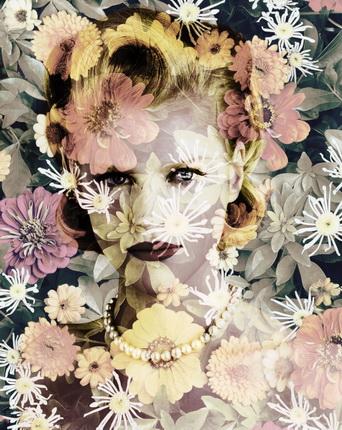 Валери Белен. Хризантема (Токио), из серии «Черноглазая Сьюзен», 2010