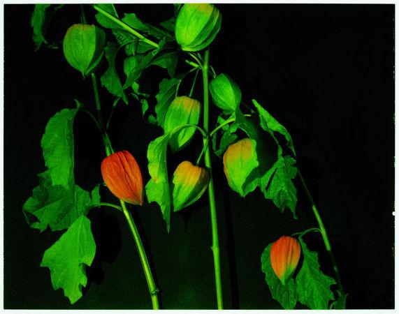 Untitled #10 (Plant), Polaroid print. (Miranda Lichtenstein/Courtesy Elizabeth Dee Gallery)