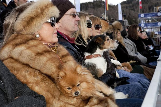 SWITZERLAND. St Moritz. St Moritz polo world cup on snow. Spectators at the event. 2011. © Martin Parr/Magnum Photos
