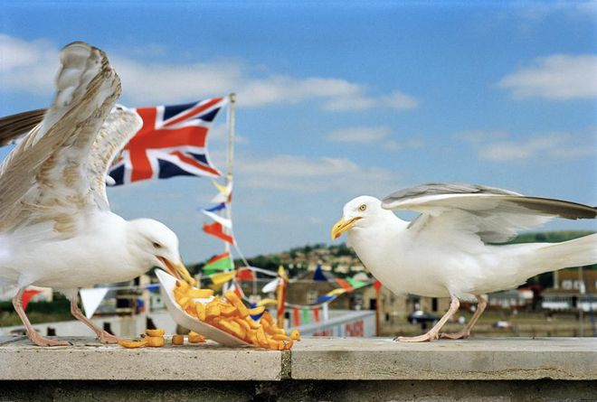 GB. England. West Bay, a small seaside town in Dorset. 1996. © Martin Parr/Magnum Photos