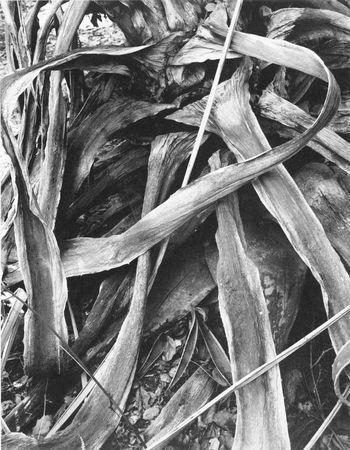 Untitled, 1946 (Rose Mandel/Rose Mandel Archive)