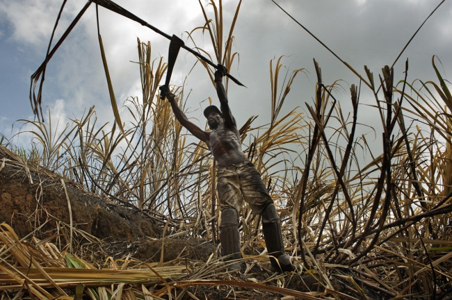 © Francesco Zizola. Bitter Harvest (Brazil) / The Sweet and Sour Story of Sugar