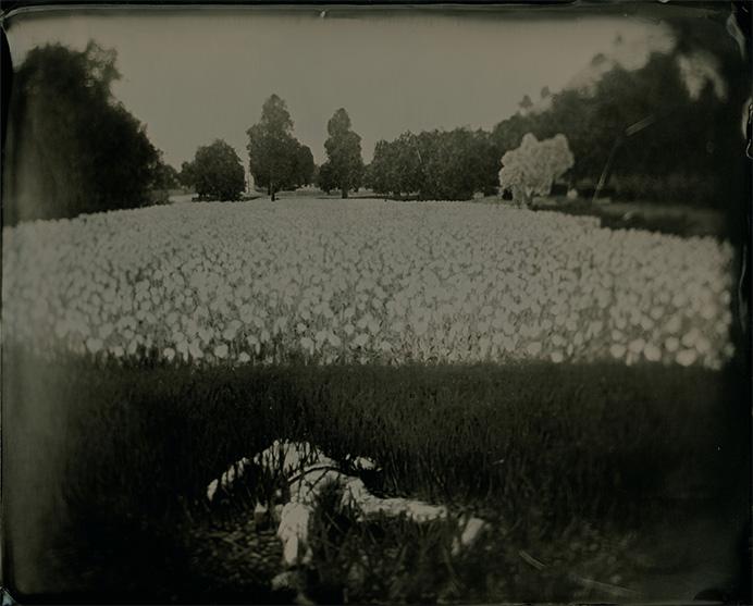© Karl Burke. Из серии The Harvest of Death, v.2.