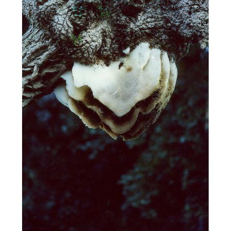 Daniel Gustav Cramer: Beehive, 2013. C-print Framed: 43,4 x 34,5 cm Edition 5 + 2 AP. Artwork Of Sies + Höke
