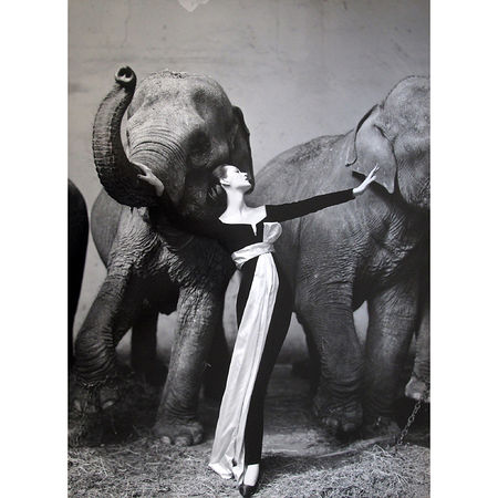 Richard Avedon: Dovina with Elephants, Evening Dress by Dior, Cirque d
