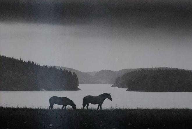 Ладога. Раздолье, 1984