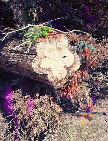 Волновой монстр. Из серии «Странный рай» © Чарли Рубен