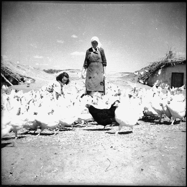 ©Марлен Матус (1939–2014). «Украина, Полтавская область, село Лучки»