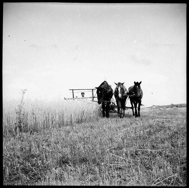 ©Марлен Матус (1939–2014). «Украина, Полтавская область, село Старый Орлик. 1951»