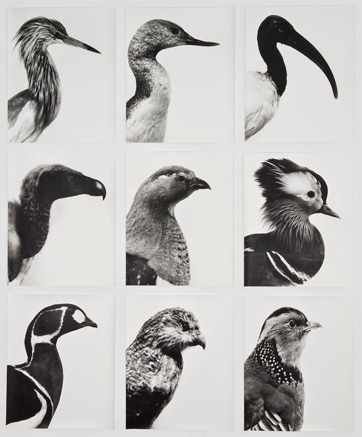 © Jochen Lempert, Aves-Ucelli, 1997-2013, 9 photographs, gelatin silver prints, 59 x 48 cm each photograph. Overall dimensions; 187 x 154 cm, Ed. 6, Photograph: Roberto Ruiz / Courtesy ProjecteSD
