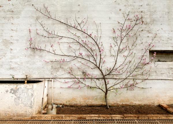 © Amanda Harman, Великобритания. 1-е место в категории Still Life