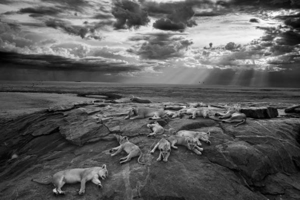 © Michael Nichols, США. 1-е место в категории Nature Wildlife