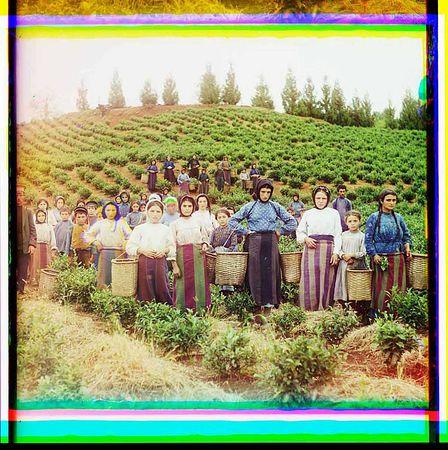 Сергей Прокудин-Горский. Группа рабочих на сборе чая, гречанки, Чакви, 1912