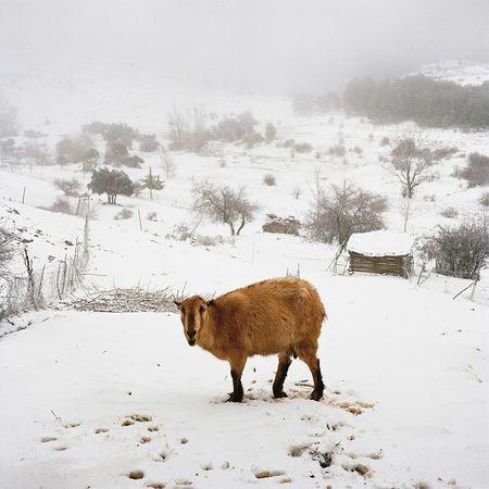 © Antoine Bruy. Из серии Scrublands