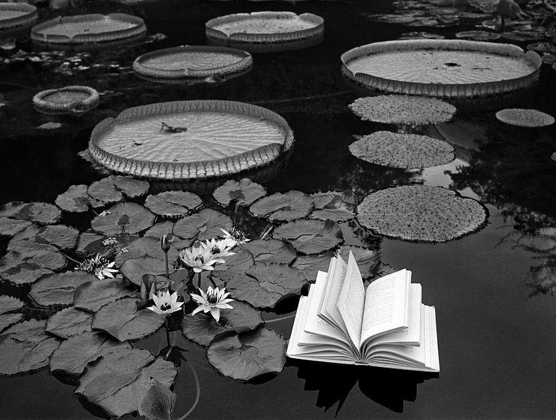 ©Флор Гардуньо. «Уроки ботаники, 1997»