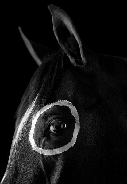 ©Флор Гардуньо. «Лошадь с кругом, USA, 1993»